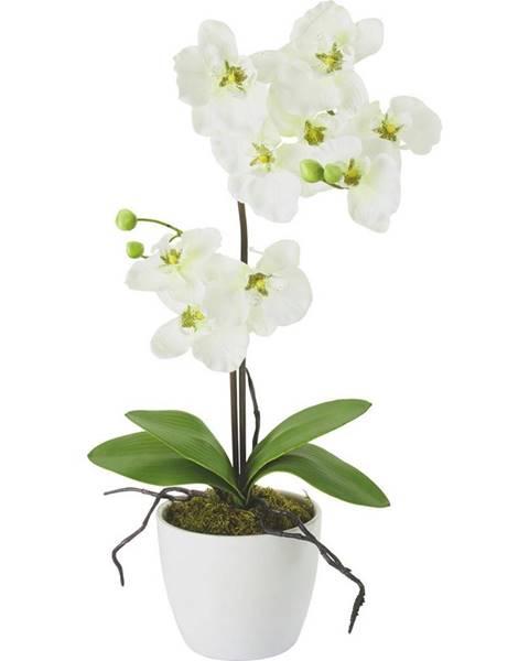 Möbelix Umelá Rastlina Orchidee