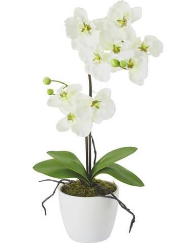 umelá Rastlina Orchidee