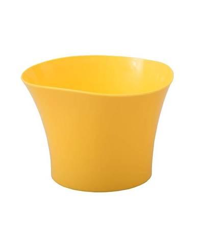 Obal Primule 12 cm/žltý