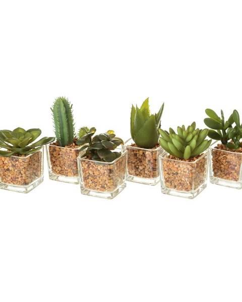 Unimasa Sada 6 umelých dekorácii v tvare kaktusov Unimasa