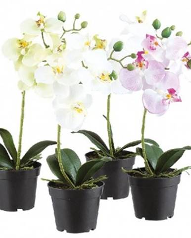 Umelá kvetina v kvetináči Orchidea, 35 cm%